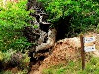 Kaštanovníky | potomci stromů, jejichž plody se živili otroci těžící zlato| Přidal: IvSi, id:20120618134519500