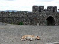 Strážce východu z citadely, Bragança | | Přidal: IvSi, id:20120618134253412