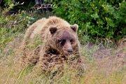 Cestou do parku Wrangell-St.Elias | | Přidal: Wickie, id:20190817151812231