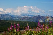 Oba vrcholy Mt. McKinley nad mraky | | Přidal: Wickie, id:20190817151840288