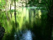 NP Biogradska gora | | Přidal: IvSi, id:20080114115925196