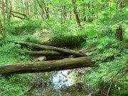 NP Biogradska gora | | Přidal: IvSi, id:20080114115922388