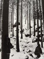 Nasněžilo... | Z Kóřova archivu| Přidal: Admin, id:20200223104623229